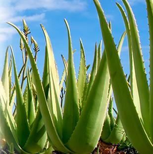 Botanical Based Skincare